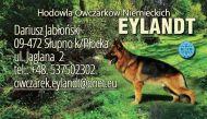 Eylandt